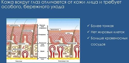 структура кожи вокруг глаз